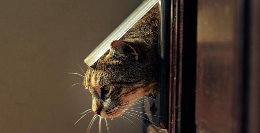 Installing Best Cat Door